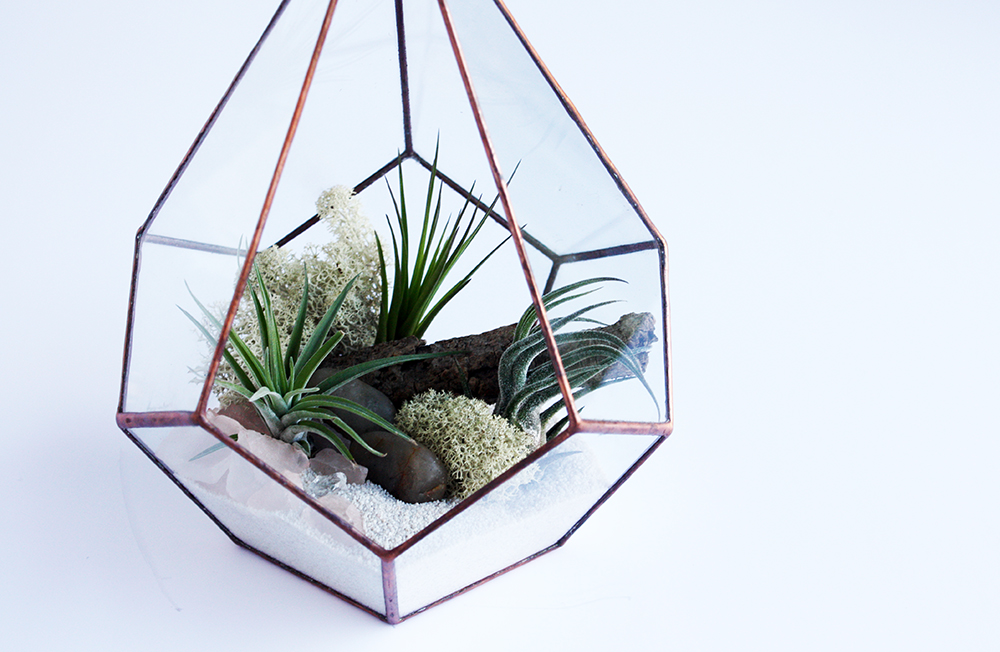 Find more at http://crownflorastudio.com/terrarium/